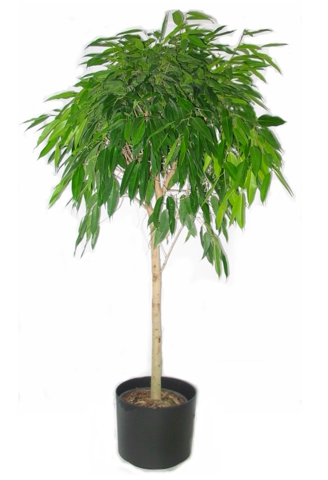 High Light Plants